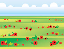 Landscape with poppies. Sunny meadow with bright poppies in spring Stock Photos