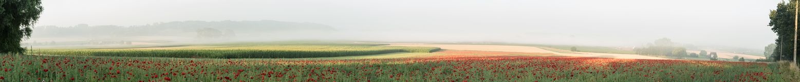 Landscape of poppies. On a beautiful misty morning with a landscape of poppies royalty free stock photos