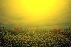 Landscape with poppies and chamomile in sunset light 7 Royalty Free Stock Image