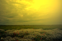 Landscape with poppies and chamomile in sunset light 5 Royalty Free Stock Photos