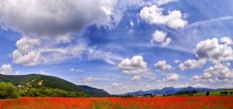 LANDSCAPE POPPIES FIELD. Beautiful panorama landscape with poppies field and bright blue sky with clouds Stock Photography