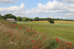 Landscape with  poppies and margurittes in a cloudy summerday Royalty Free Stock Photos