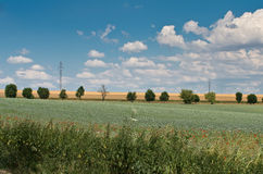 Landscape with poppy field and alley of trees Royalty Free Stock Image