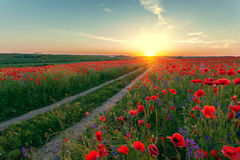 Landscape with poppy field Royalty Free Stock Images