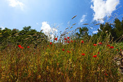 Landscape of a poppy  hill  with Trees and sky Stock Photo