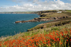 Landscape in Port Isaac Stock Images