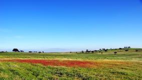 Landscape of  field Stock Photography
