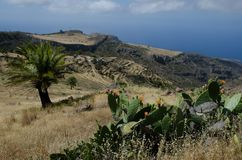 Landscape with pricky pear plant Opuntia maxima in the foreground and Canary Island date palm Phoenix canariensis from behind. Alajero. La Gomera. Canary royalty free stock image