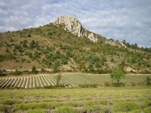 Landscape in Provence Stock Image