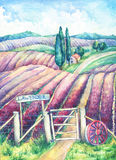 Landscape in Provence. Colorful blooming lavender fields with rural house, nameplate, cart-wheel and fence. Hand drawn watercolor painting Stock Image