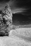 Landscape in the Provence upright. Landscape in the Provence, south of France, showing vineyards and trees  under a dark sky. Blackandwhite, taken in infrared Stock Photo