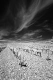 Landscape in the Provence upright. Landscape in the Provence, south of France, showing vineyards under a dark sky. Blackandwhite, taken in infrared light Royalty Free Stock Image