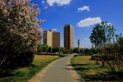 Landscape of public garden. Under the blue sky Royalty Free Stock Image