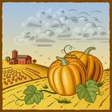 Landscape with pumpkins Royalty Free Stock Image