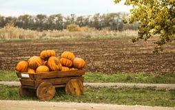 Landscape with pumpkins Stock Photo