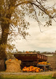 Landscape with pumpkins Royalty Free Stock Images