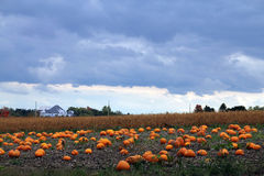 Landscape with Pumpkins Royalty Free Stock Photos