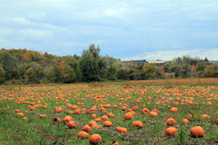 Landscape with Pumpkins Stock Images