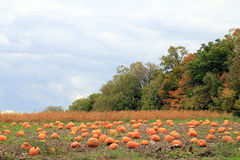 Landscape with Pumpkins Stock Photography