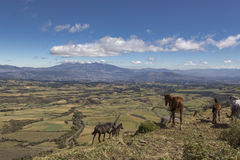 Landscape of Quito, Ecuador, with Pichincha volcano and horses Stock Photo