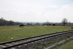 Landscape with rails. Donkey and cow grazing near the rails Stock Image