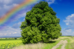Landscape with rainbow. Lanscape with big tree, cloudy sky and rainbow royalty free stock photos