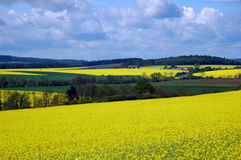 Landscape with rape field Royalty Free Stock Photography
