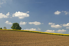Landscape with rape field in spring, Lower Saxony Royalty Free Stock Photography