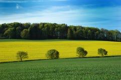 Landscape Rapseed Stock Photos