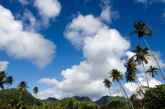 Landscape of Rarotonga Cook Islands Royalty Free Stock Photography