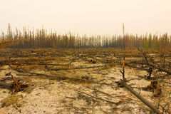 A landscape ravaged by fire in northern canada Stock Images