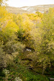 Landscape ravine with creek autumn yellow trees foliage and word love in Russian Royalty Free Stock Photos