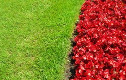 Landscape with red flower bed and grass Stock Image