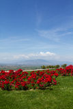 Landscape with red flowers Royalty Free Stock Photos