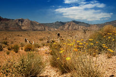 Landscape at Red rock canyon Royalty Free Stock Image