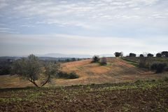 Landscape reddish lands and olive trees royalty free stock image