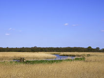 Landscape of Reedbed on the River Alde - Snape  - Suffolk Royalty Free Stock Images