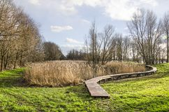 Landscape with reeds and plankbridge stock images