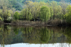 Landscape with reflection in water. Mountains, forest, water, reflected in the lake Stock Image