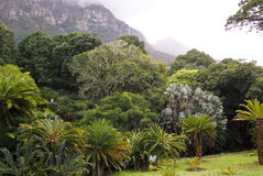 Landscape in Republic of South Africa - Kirstenbosh botanical Royalty Free Stock Photography