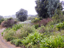 Landscape in Republic of South Africa - Kirstenbosh Stock Photos