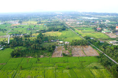 Landscape of rice farm Stock Photography