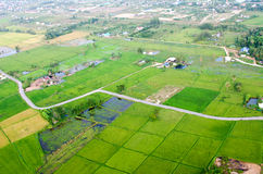 Landscape of rice farm. In Thailand in bird eye view Stock Image