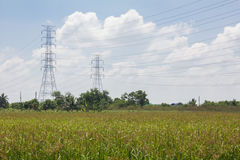 Landscape Rice feild on blue sky with pipe power Stock Images