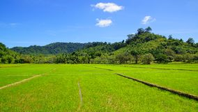 Landscape with rice field. Royalty Free Stock Photo