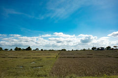 Landscape of a rice field. With clouds in the sky stock image