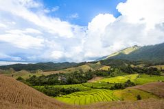 Landscape rice field on the hill stock photo