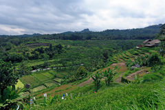 Landscape with Rice Field and Jungle, Bali Royalty Free Stock Photography