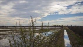 Landscape of rice field in the natural park of Las Marismas del Ampurdán. Landscape of rice field in the natural park of Marshes of Ampurdán, Girona stock photos
