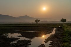 Landscape of rice field with newly planted rice sprouts in the sunrise. royalty free stock image